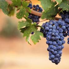 Vinařský pobyt Léto 2017 (3 noci)