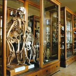 Hrdličkovo muzeum člověka