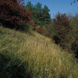 Mrzínov (přírodní památka)