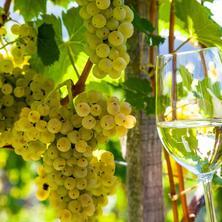 Vinařský pobyt na jižní Moravě
