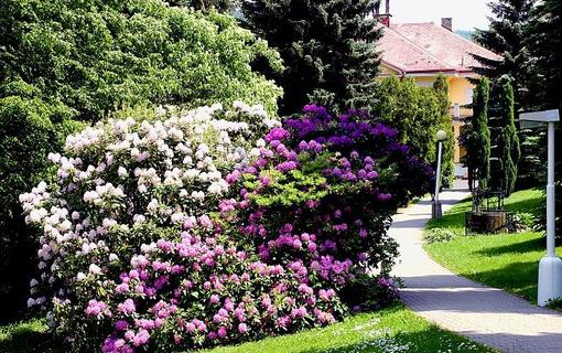 Spa Resort Libverda - Hotel Panorama 1154316763