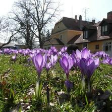Fořtovna jarní, Písecko, jižní Čechy
