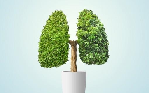 RLP   Respirační lázeňská péče-Spa Resort Sanssouci 1155102477