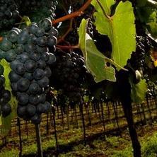 Vinařský balíček