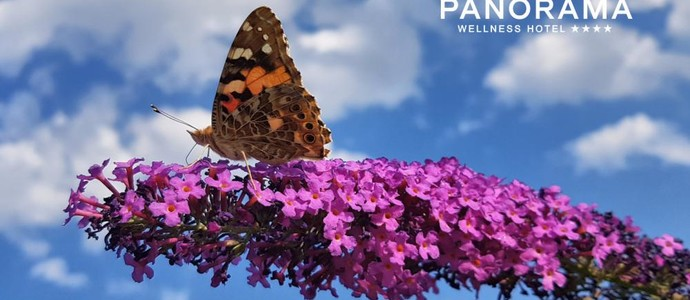 WELLNESS HOTEL PANORAMA-Blansko-pobyt-Víkend ve dvou s hýčkáním