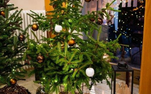 Vánoce v Monti Spa-MONTI SPA HOTEL 1156729583