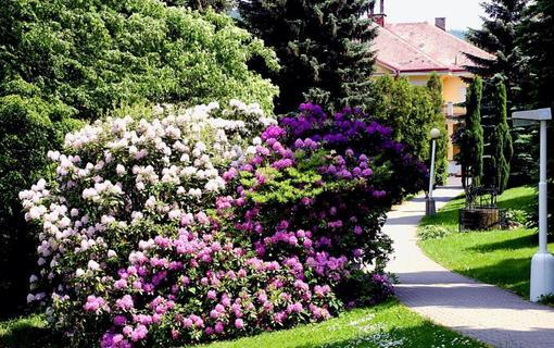Spa Resort Libverda - Villa Friedland 1154316951