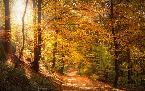 Aktivní podzim na horách -Wellness hotel Říčky 1155899061