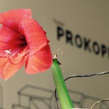 Hotel Prokopka Praha 974244080