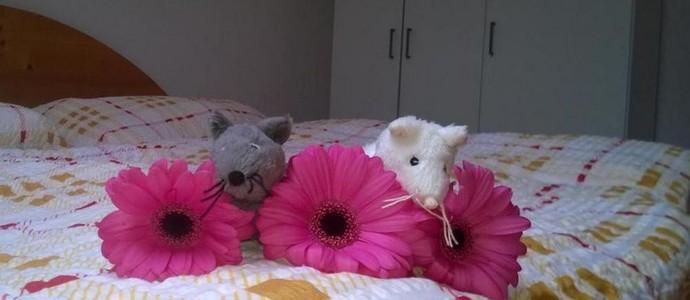 Myši v botě Lipno nad Vltavou